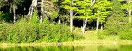 Fotografía de un bosque a orillas de un lago