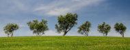 Colina verde con árboles