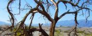 Arbol en un paisaje árido