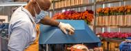 Trabajador utilizando una máquina en una centro de tratado de flores