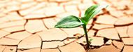Imagen de Resiliencia Organizacional